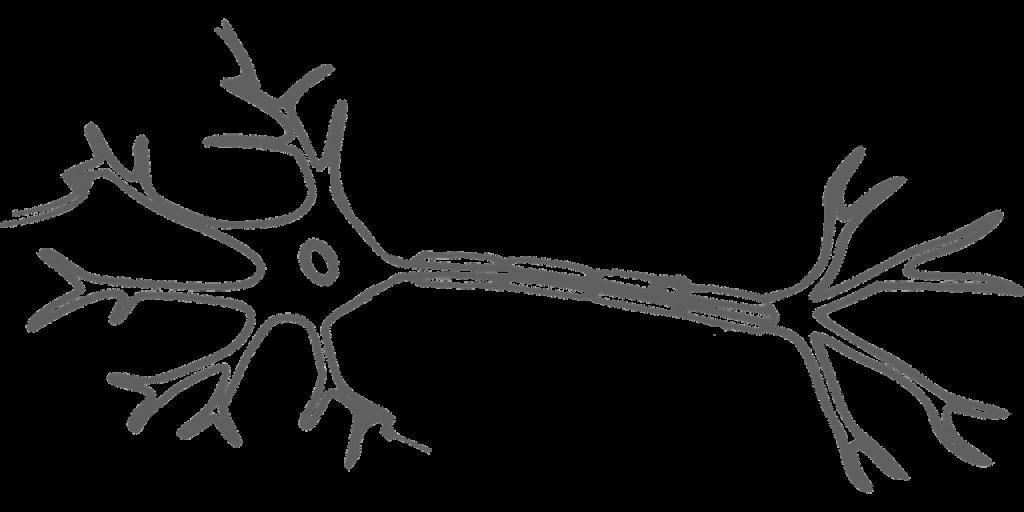 neurology pathophysiology