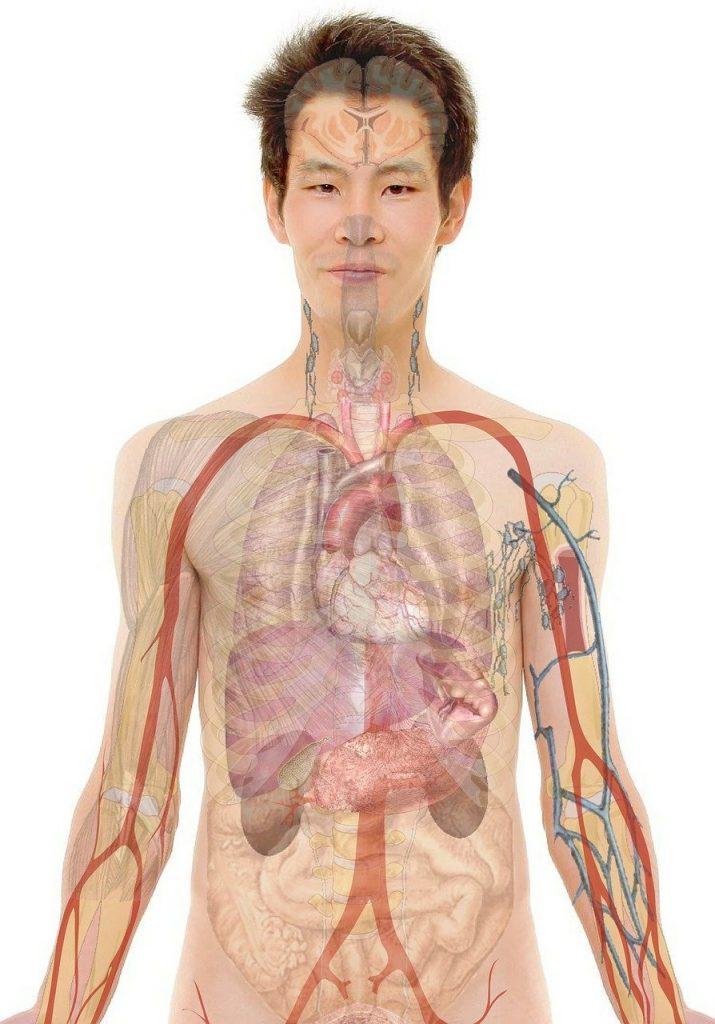 The four primary tissue types