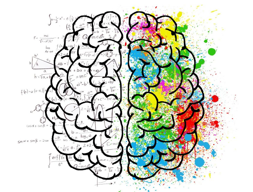 connects the medulla to the midbrain
