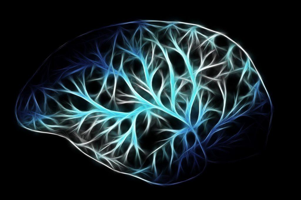cranial nerves