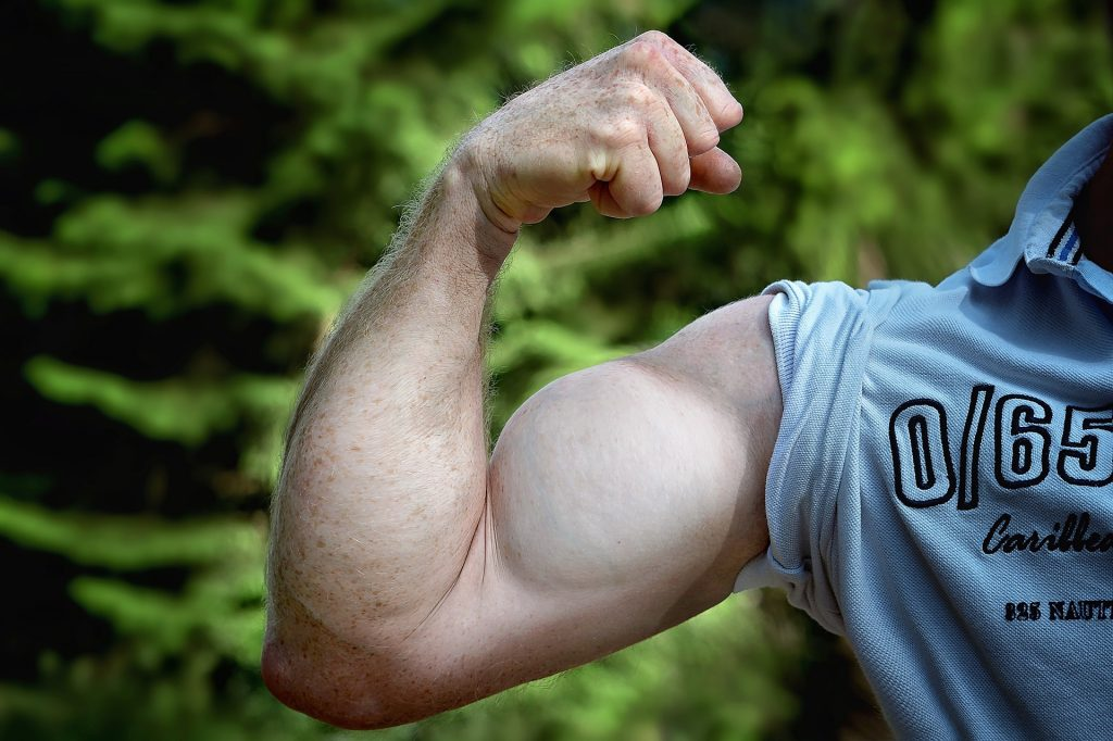 flexion and extension of the arm