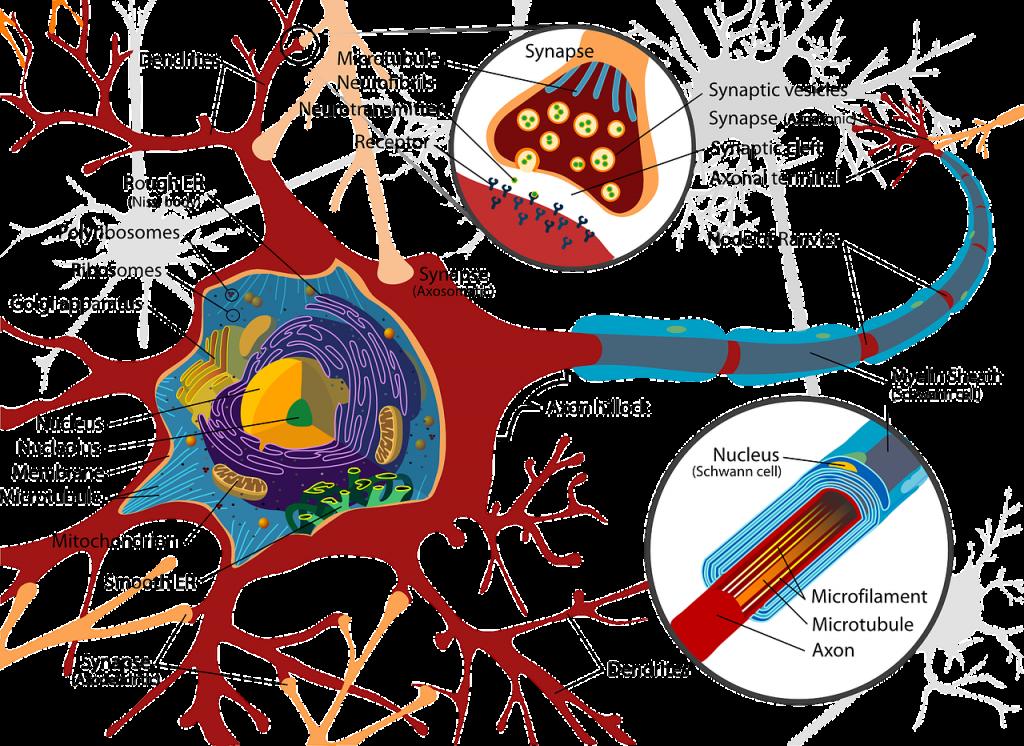 cranial nerves may impair sense of taste