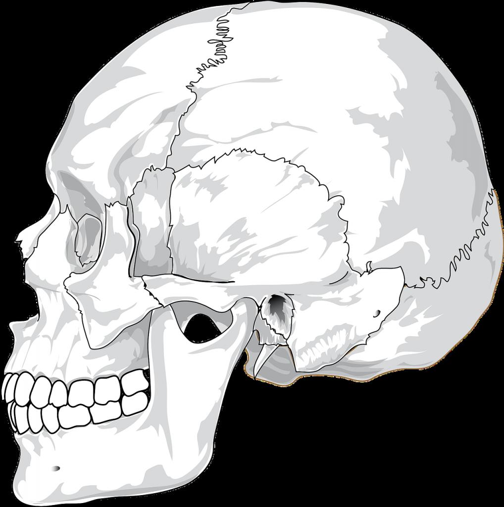 The sagittal suture