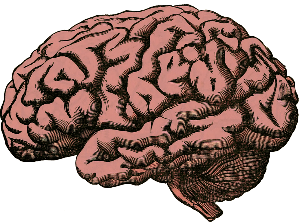 part of the midbrain