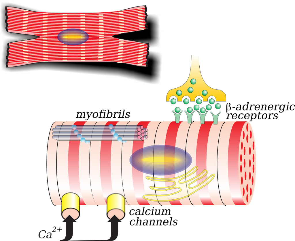 target cell for a hormone