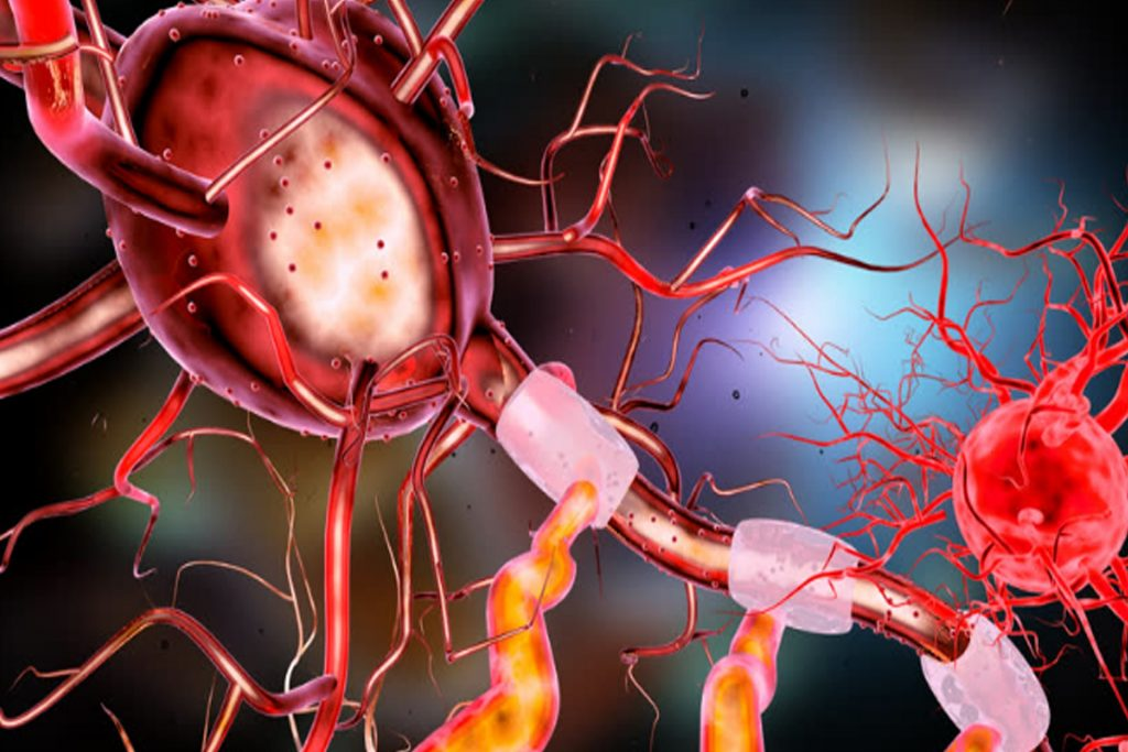 In an ascending pathway, axons of the secondary neuron travel from the