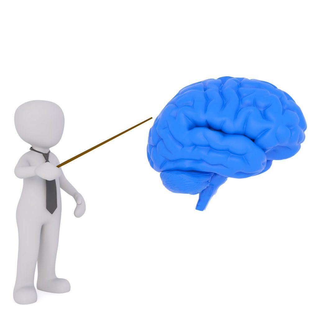 portion of the brainstem